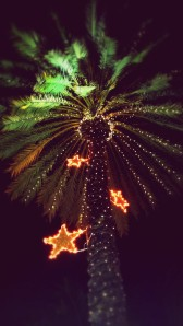Christmas decorations on a palm tree  in South Beach